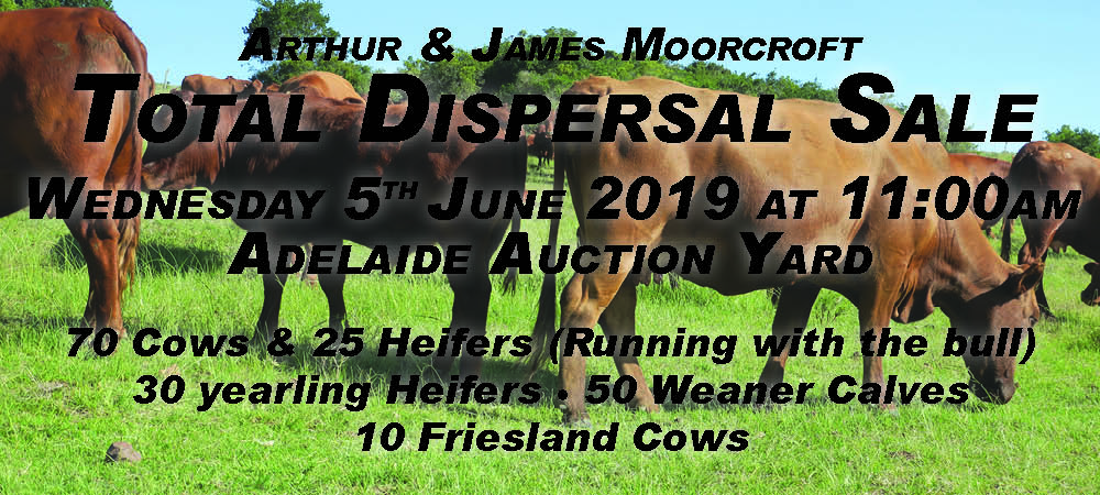Arthur & James Moorcroft Total Dispersal Sale (Cattle)