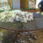 Shearing Table