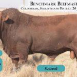 BenchmarkBulls11