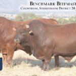 BenchmarkBulls12