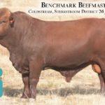 BenchmarkBulls13