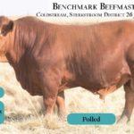 BenchmarkBulls14
