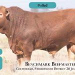 BenchmarkBulls15