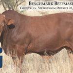 BenchmarkBulls16