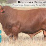 BenchmarkBulls17