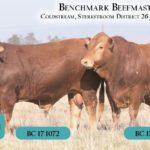 BenchmarkBulls18