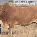 BenchmarkBulls19