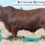 BenchmarkBulls4