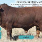 BenchmarkBulls5