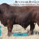 BenchmarkBulls6
