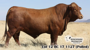 Lot 12 BC 17 1127 (Polled)