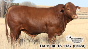 Lot 19 BC 18 1137 (Polled)