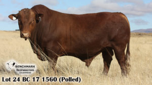 Lot 24 BC 17 1560 (Polled)