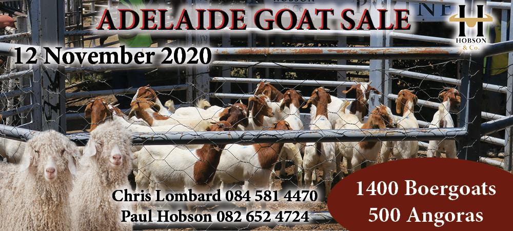 Adelaide Goat Sale
