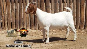 Danie Schoeman 3