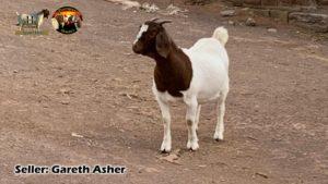 Gareth Asher Females 3