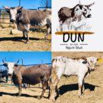Dale Cunningham Nguni Cow & Calf